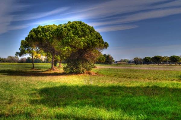 L'albero parlante di alby1990