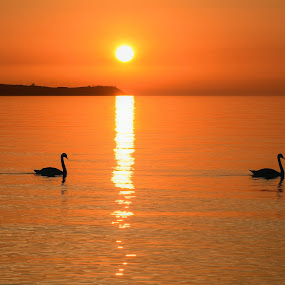 Slwing Down at the End of your Day by Jim Schlett - Landscapes Waterscapes ( orange, michigan, sunset, duck, sunrise, sun, mi )