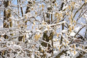Photo: Kampf der Jahreszeiten - Fight of the Seasons