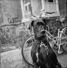 Photo: Dog In Kensington