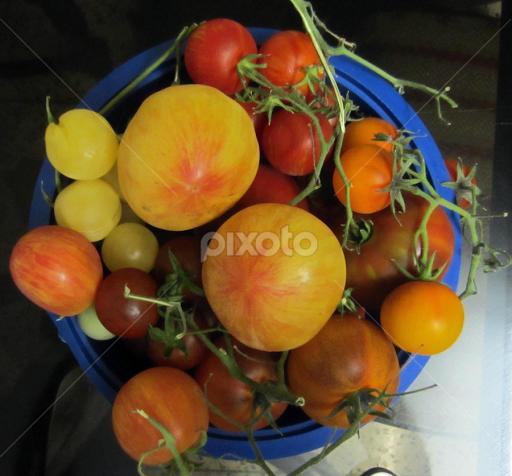 Good Morning Love It Lovely Heirloom Tomatoeseat Fresh Fruits