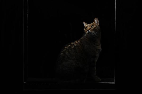 Gatto nel buio di BASTET-Clara