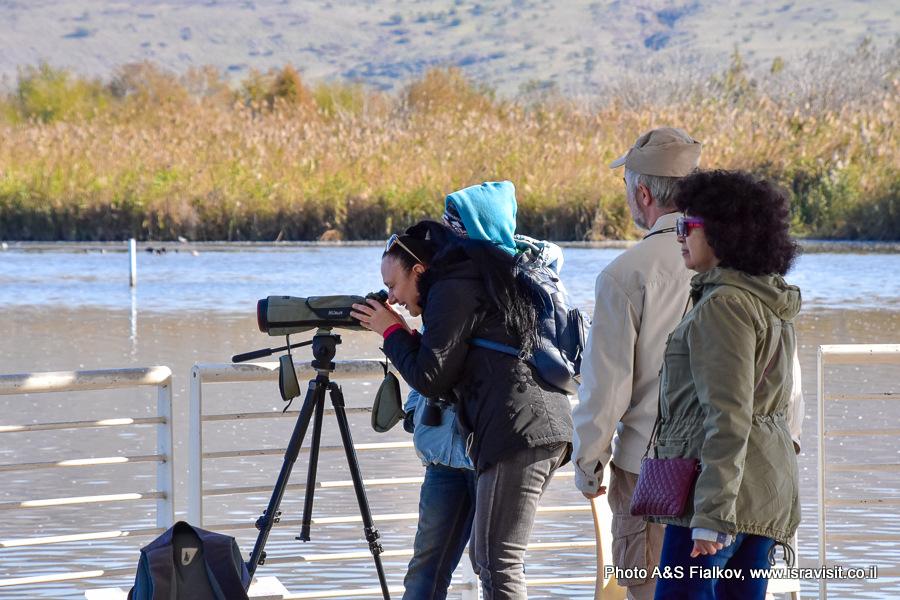 Наблюдение за птицами в Израиле в долине Эмек-ха-Хула.
