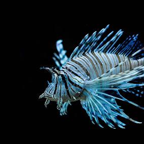 by Micah Orongan - Animals Sea Creatures
