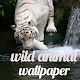 Wild Animal Wallpaper for PC-Windows 7,8,10 and Mac