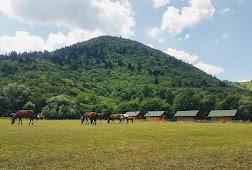 Ферма Сотира