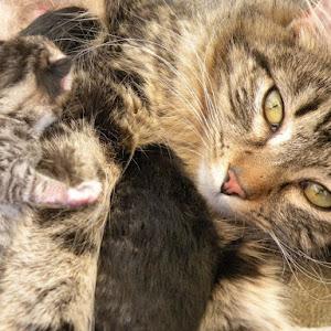 kitty and babies.jpg