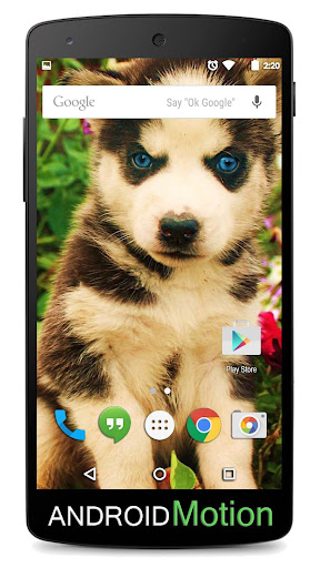 Puppy Dog Background