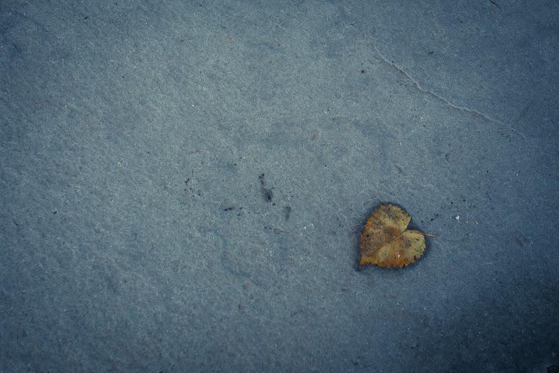 Apriti cuore... di Marcello Zavalloni