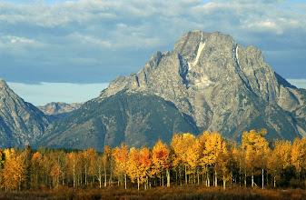 Photo: Mt. Moran towers above autumn aspen trees - Grand Teton National Park, Wyoming.