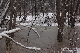 Photo: Abandoned beaver lodge