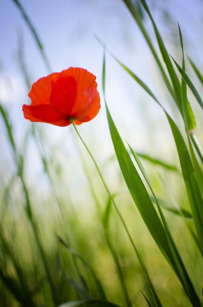 Basta un fiore che che ce vò di tina_meoow