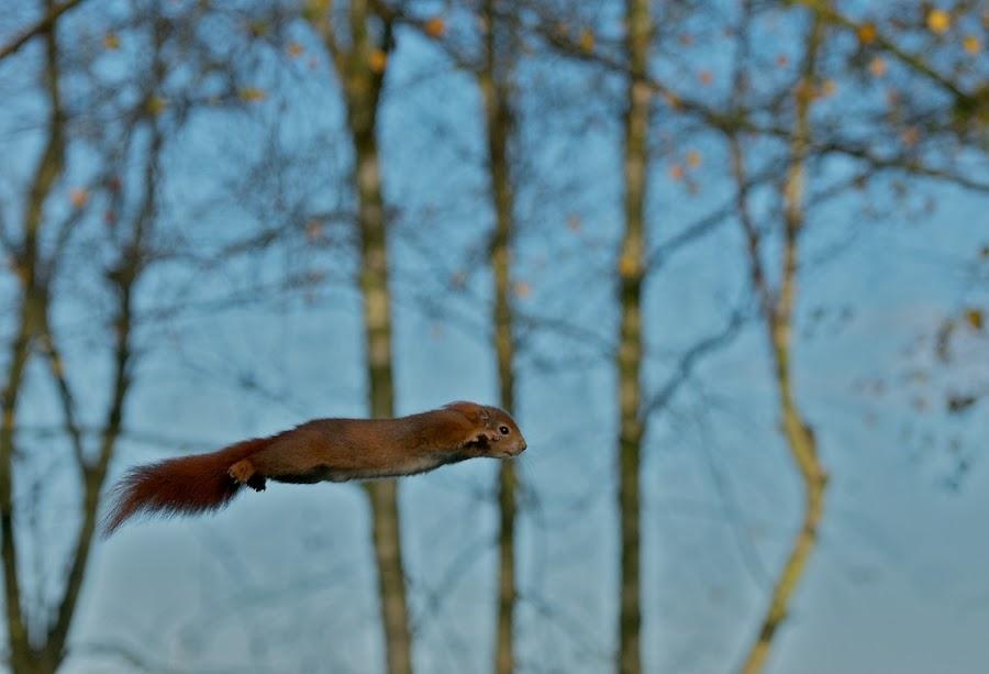 Super Squirrel by Matt Binstead - Animals Other Mammals