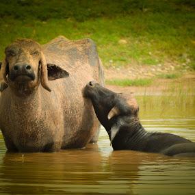 by YSKAy ClickZ - Animals Other Mammals