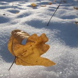 Зимен ден. by Georgi Kolev - Nature Up Close Leaves & Grasses ( сняг., слънце., сенки., зима., форми., листа. )