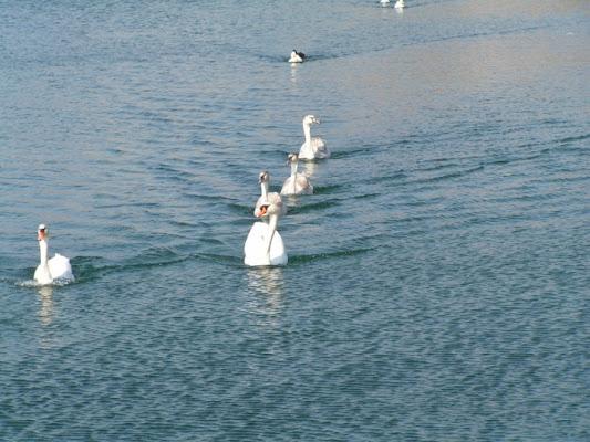 Passeggiando sull'acqua... di paoloborg