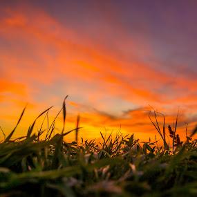 November Sunset by Baltă Mihai - Landscapes Sunsets & Sunrises ( bucharest, november, sky, sunset, beautiful, romania, landscape )