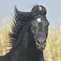 Horse Challenge icon