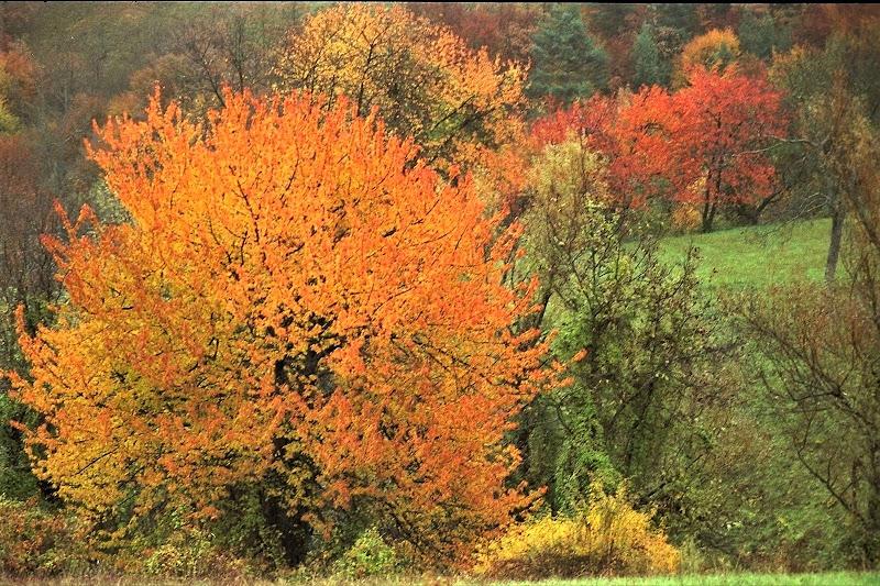 Inequivocabilmente autunno di paolo-spagg