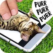 Game Pat the cat APK for Windows Phone