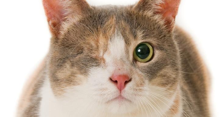 Cat Services Brooklyn Cattitude Amp Street Strutters Pet
