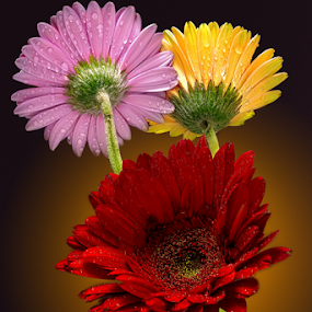 3 Friends by Sushmita Sadhukhan - Flowers Flower Arangements
