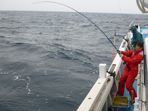 Photo: 急いで巻けーッ!サメに食われるぞー!