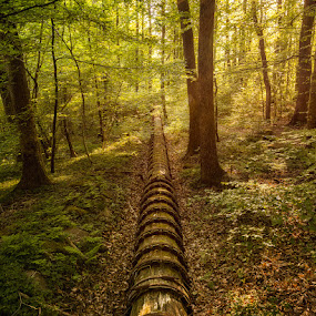 Mystery Pipe by Sergei Pitkevich - Landscapes Forests