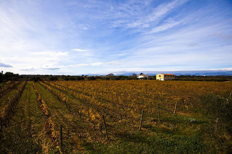Wine tourism DO Cataluña