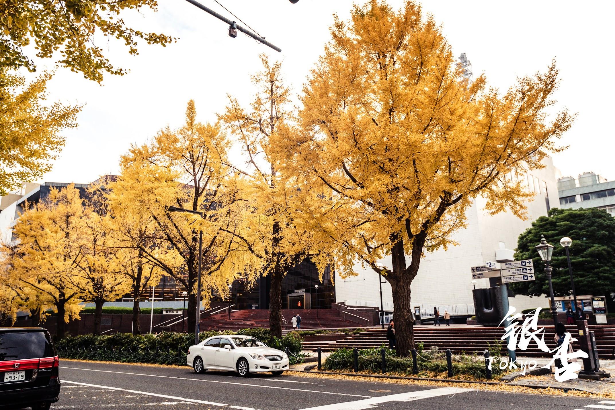 山下公園旁的銀杏大道金黃時刻非常迷人。