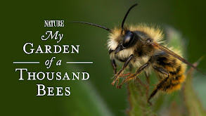 My Garden of a Thousand Bees thumbnail