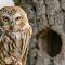 Schlitz Audubon Nature Center 5-14-16 300 dpi -14.jpg