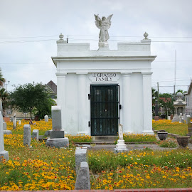 Galveston  by Brenda Shoemake - City,  Street & Park  Cemeteries