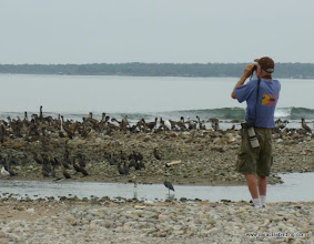 Photo: Steve Brad birding at the Aticama River mouth on Matanchen Bay
