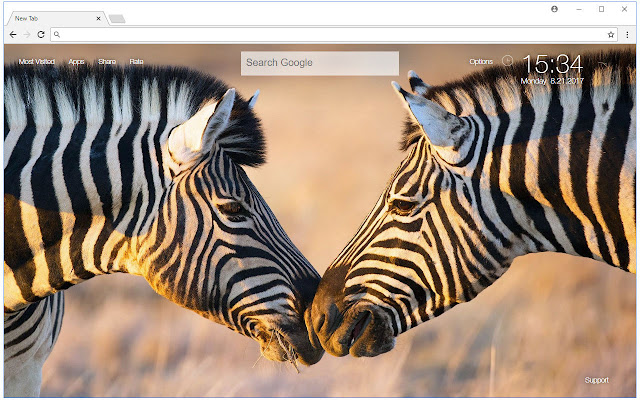 Zebra Wallpaper HD Zebras New Tab Themes