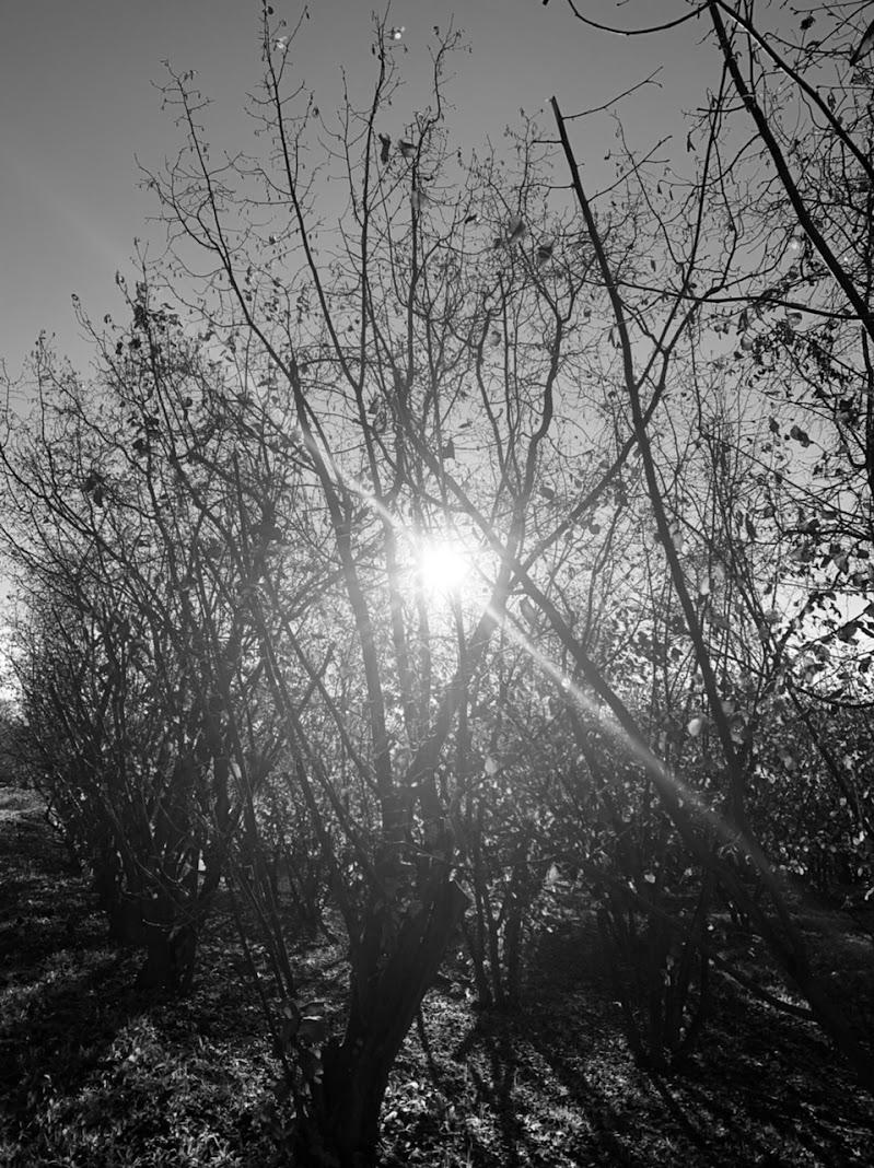Sole d'autunno  di GE