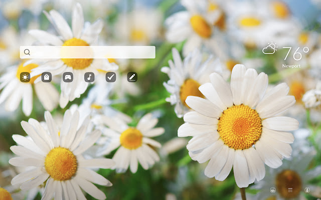 Chamomile Flowers HD Wallpapers New Tab