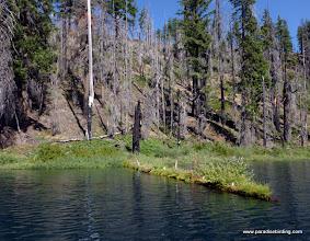 Photo: Floating garden of native vegetation along the western shore of Blue Lake