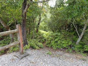 シダの生い茂る道を降りる