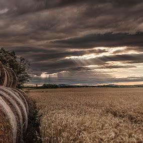 by Thomas Berwein - Landscapes Prairies, Meadows & Fields
