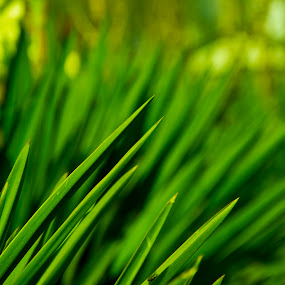 by Sudipto Ghosh - Nature Up Close Leaves & Grasses ( green, grass. macro, cloeup, bokey )