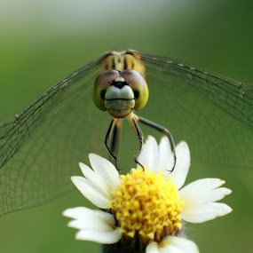 I Got The Flower by Yunita Halim - Animals Insects & Spiders