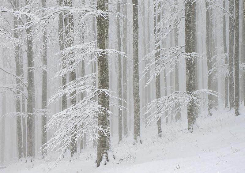 Frozen di renavett