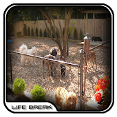 Dog Home Fence Design