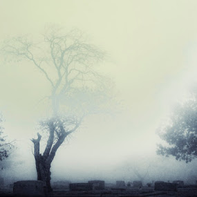 the death sentinel by Ruby Del Angel - City,  Street & Park  Vistas ( tree, fog, death, cemetery, landscape, morning, graveyard )