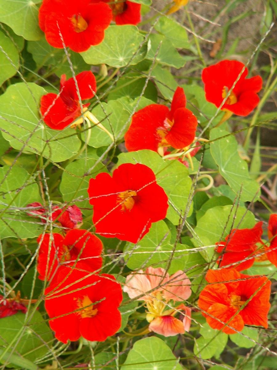 Die ersten Blumen im Jahr sind bald verblüht, aber im Moment hat man sie noch in guter Erinnerung. Können wir für Anfänger bis zum Vorfrühling neue Blumen finden 0174