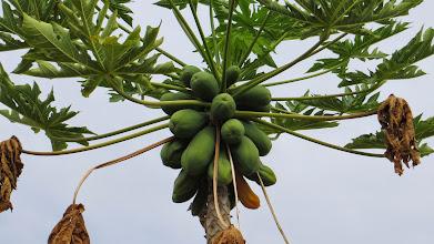 Photo: Papaya