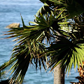 beach palm tree wallpaper - beach resort wallpaper APK
