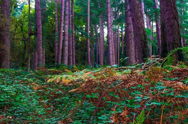 Autunno nei boschi  di stefytina