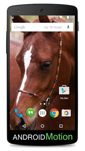 Horse Background